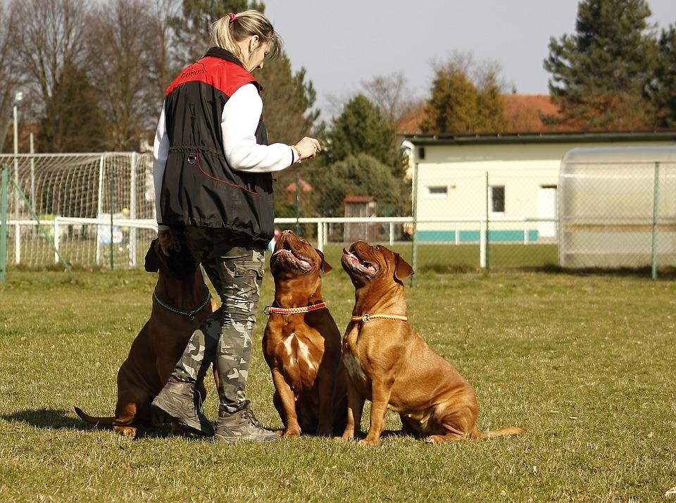 profesjonalna smycz dla wszystkich psów